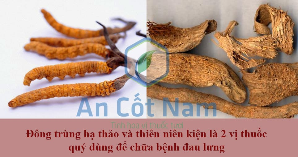vi thuoc an cot nam